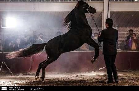 برج میلاد تهران میزبان جشنواره صنعت اسب ایرانی و طبیعت گردی